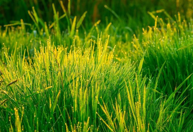 Mooi groen gras royalty-vrije stock foto