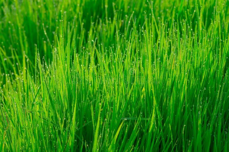 Mooi groen gras stock afbeelding