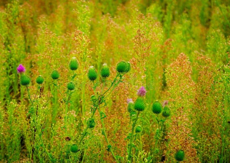 Mooi groen gras royalty-vrije stock afbeeldingen