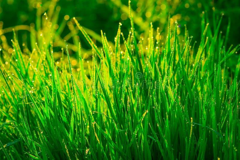 Mooi groen gras stock afbeeldingen