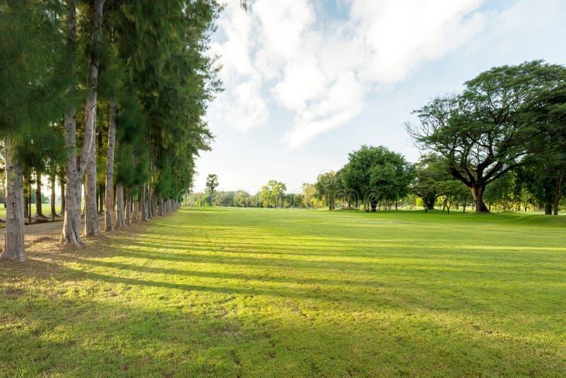Mooi groen graslandschap bij het tuinpark royalty-vrije stock foto