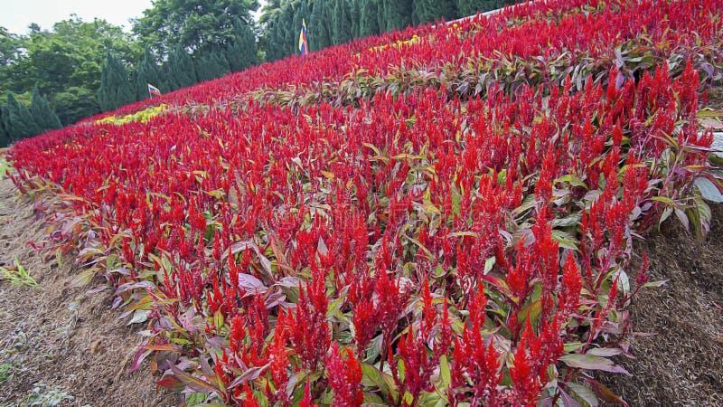 Mooi groen landschap in Putrajaya Maleisië royalty-vrije stock afbeelding