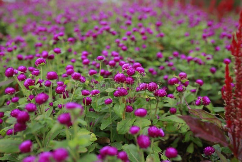 Mooi groen landschap in Putrajaya Maleisië stock afbeeldingen