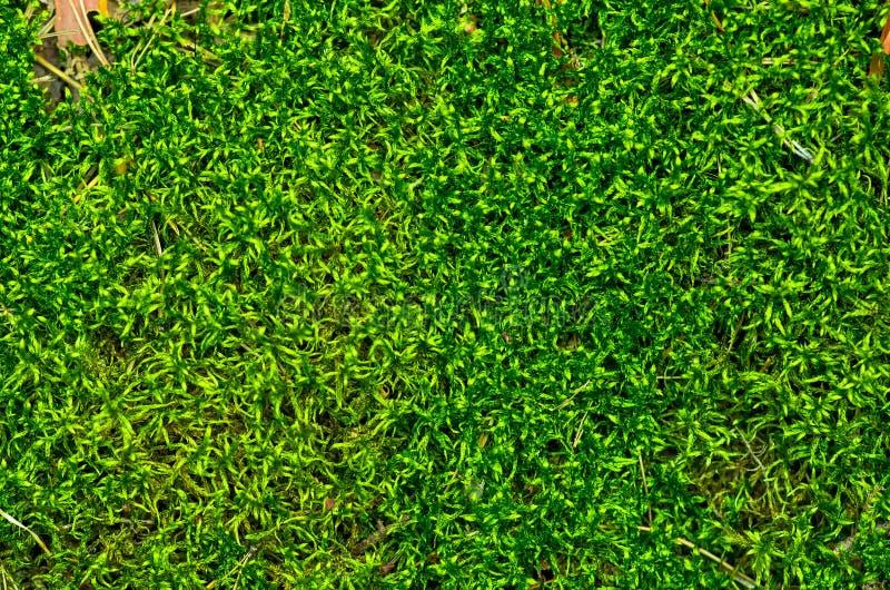 Mooi Groen Moss In The Forest royalty-vrije stock afbeeldingen