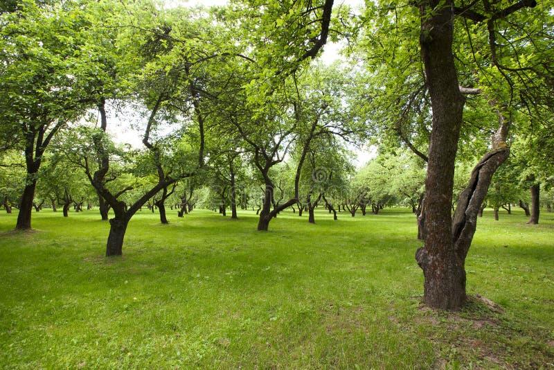 Mooi groen park royalty-vrije stock foto's