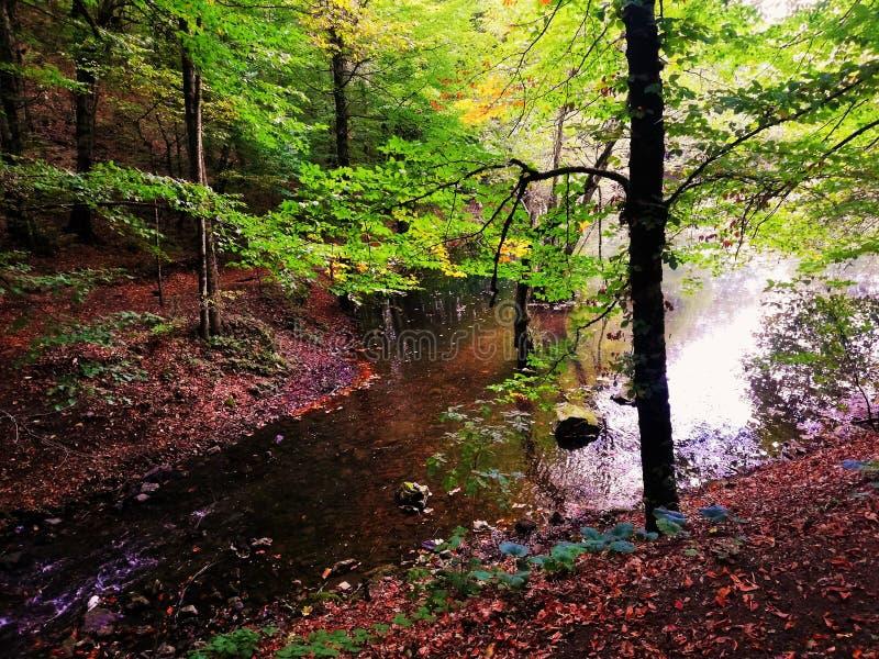 Mooi groen park stock fotografie
