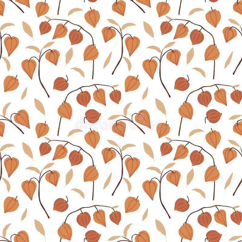 Mooi hand getrokken bloemen naadloos patroon Physalisfruit, bladeren en takken op witte achtergrond wordt geïsoleerd die De herfs royalty-vrije illustratie