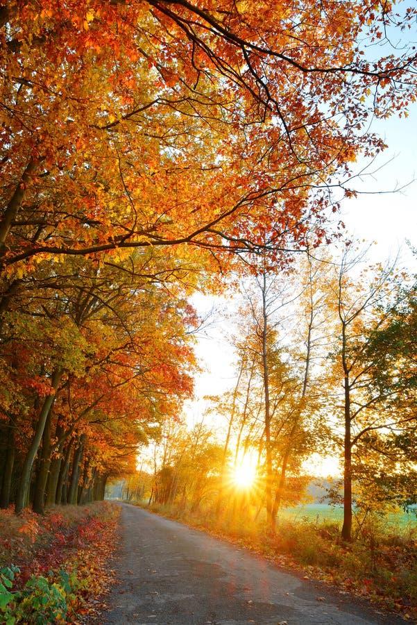 Mooi HerfstPark royalty-vrije stock foto's