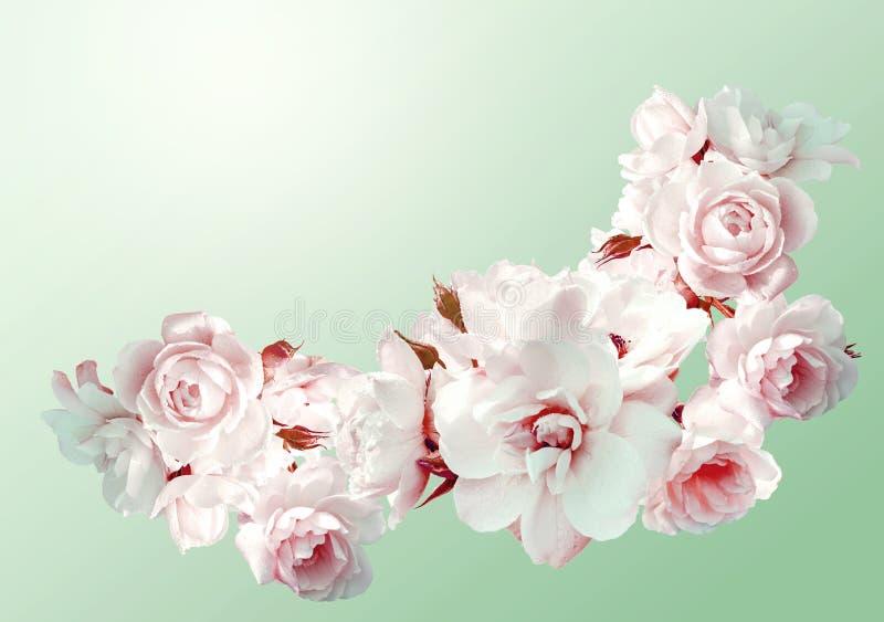 Mooi horizontaal kader met een boeket van witte rozen met regendalingen Uitstekend stemmend beeld stock foto