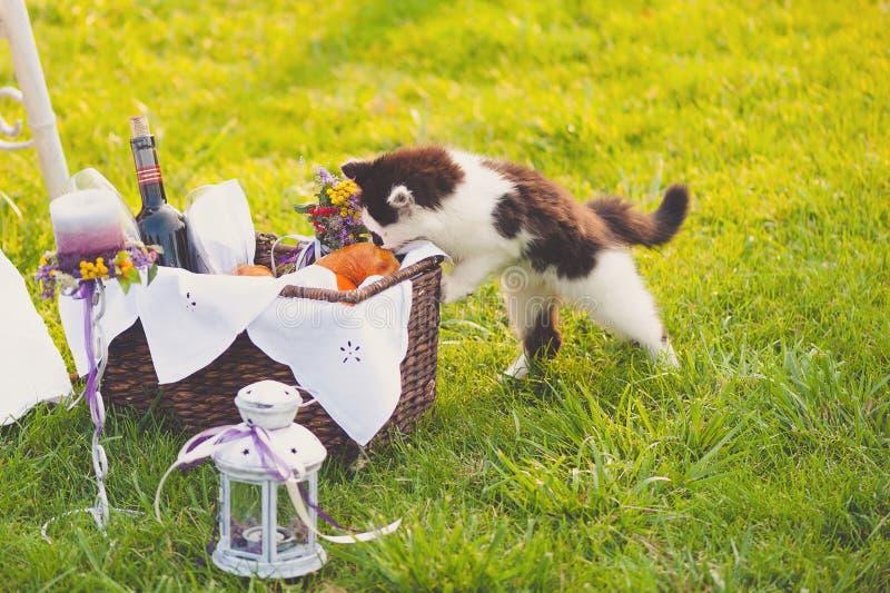 Mooi huwelijksdecor met een kat stock afbeelding