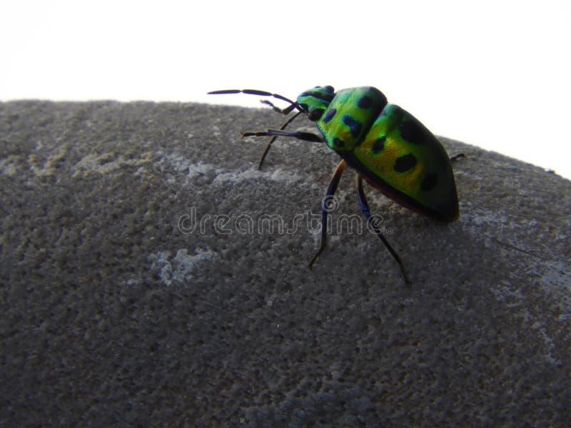 Mooi insect op stoel, Kever stock foto