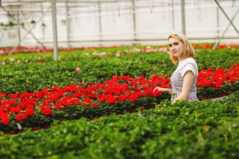 Mooi jong glimlachend meisje, arbeider met bloemen in serre Het conceptenwerk in de serre, bloemen De ruimte van het exemplaar royalty-vrije stock foto
