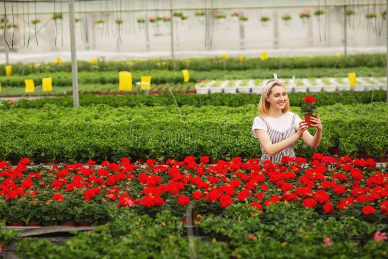 Mooi jong glimlachend meisje, arbeider met bloemen in serre Het conceptenwerk in de serre, bloemen De ruimte van het exemplaar stock foto
