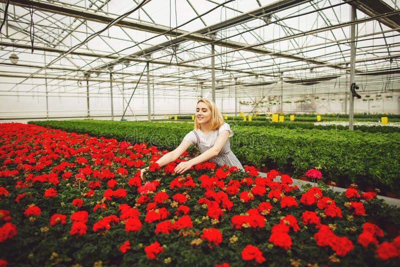 Mooi jong glimlachend meisje, arbeider met bloemen in serre Het conceptenwerk in de serre, bloemen De ruimte van het exemplaar stock fotografie