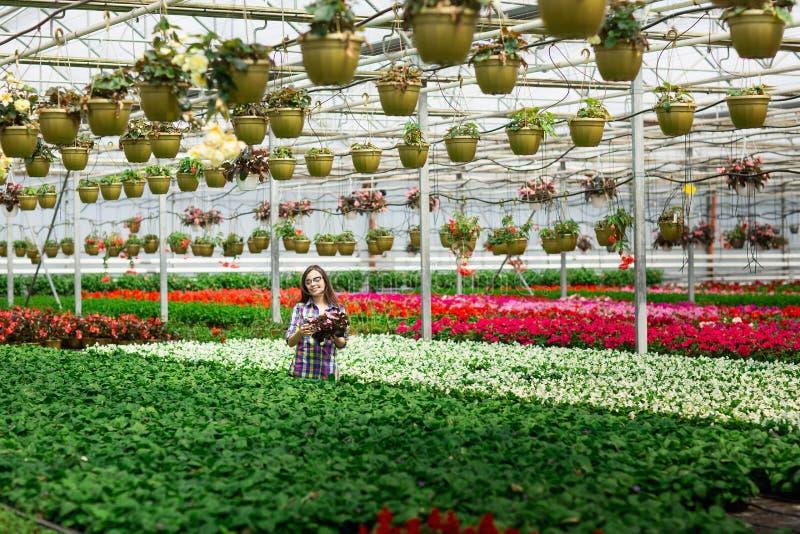 Mooi jong glimlachend meisje in glazen, arbeider met bloemen in serre Het conceptenwerk in de serre De ruimte van het exemplaar royalty-vrije stock afbeeldingen