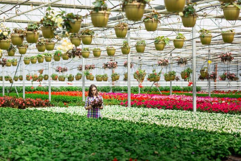 Mooi jong glimlachend meisje in glazen, arbeider met bloemen in serre Het conceptenwerk in de serre De ruimte van het exemplaar stock foto's