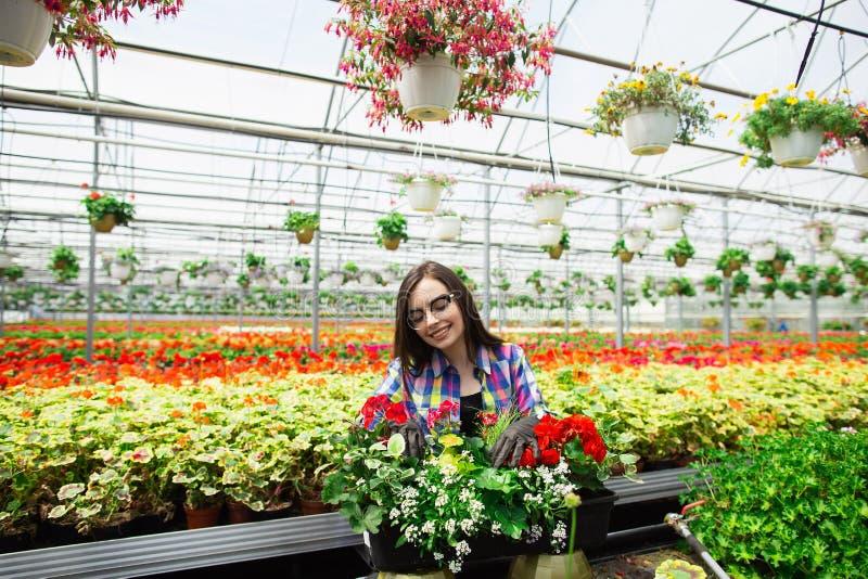 Mooi jong glimlachend meisje in glazen, arbeider met bloemen in serre Het conceptenwerk in de serre De ruimte van het exemplaar stock afbeeldingen