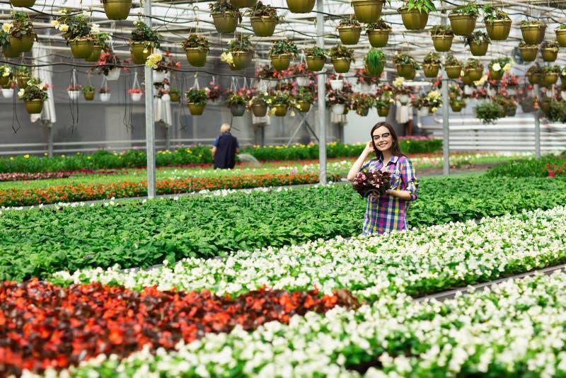 Mooi jong glimlachend meisje in glazen, arbeider met bloemen in serre Het conceptenwerk in de serre De ruimte van het exemplaar royalty-vrije stock foto's