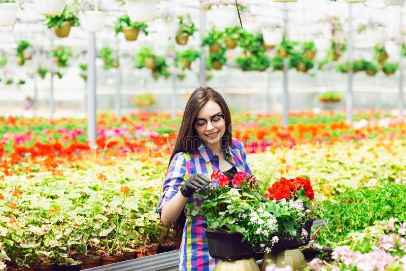 Mooi jong glimlachend meisje in glazen, arbeider met bloemen in serre Het conceptenwerk in de serre De ruimte van het exemplaar stock foto