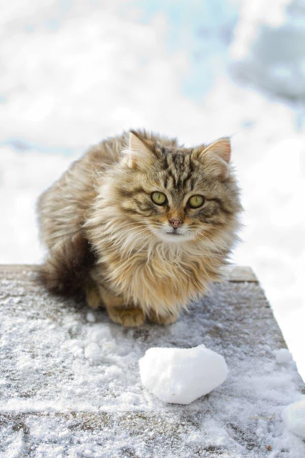 Download Mooi katje. stock afbeelding. Afbeelding bestaande uit katachtig - 29512109