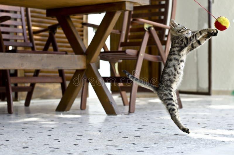 Mooi kattendeel royalty-vrije stock fotografie