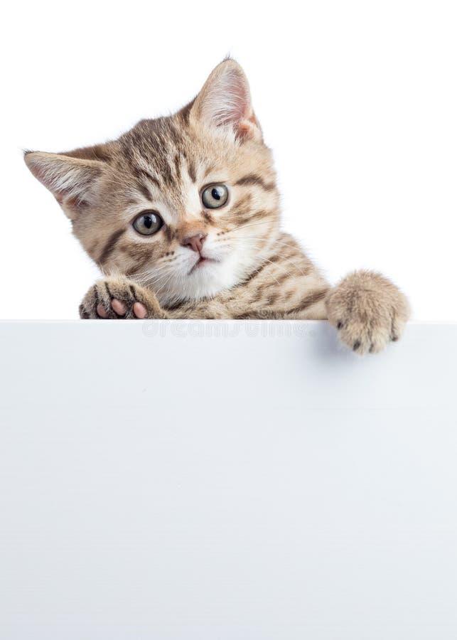 Mooi kattenkatje die uit een leeg die teken gluren, op witte achtergrond wordt geïsoleerd royalty-vrije stock fotografie