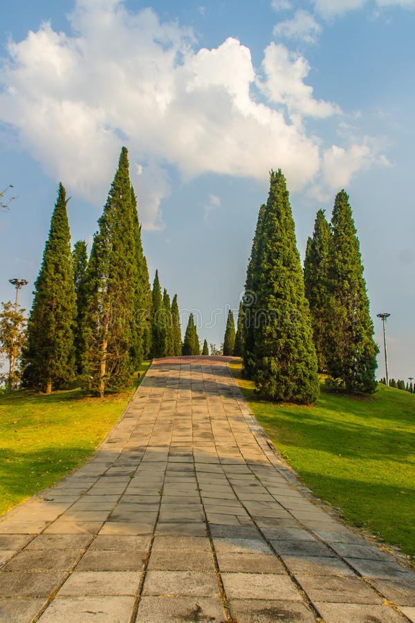 Mooi klein heuvellandschap met lange pijnboombomen op groen grasgebied en de blauwe achtergrond van de hemel witte wolk Chinensis stock afbeeldingen