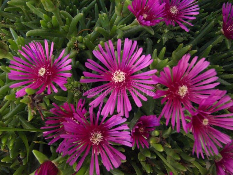 Mooi, kleuren, bloemen, tropische aard, uitdagendheid, minachting, opent, vir, Kroatië stock foto's