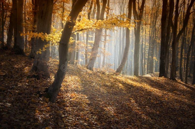Mooi kleurrijk bos in de herfst royalty-vrije stock fotografie