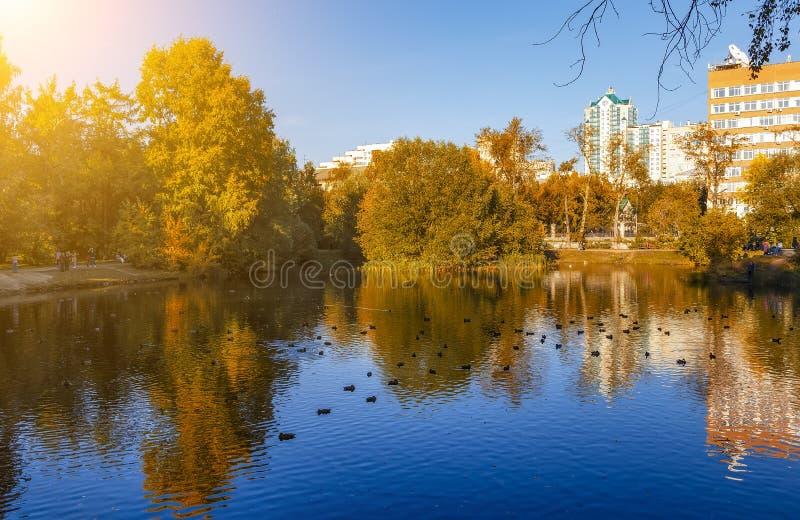 Mooi kleurrijk landschap Het park van de de herfststad De herfst bij vijver De gouden poetsmiddelherfst stock fotografie