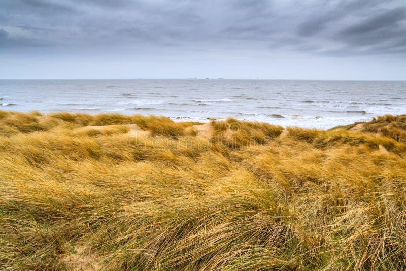 Mooi kustlandschap - de kust van Zuid-Holland met gras behandelde zandduinen royalty-vrije stock afbeelding