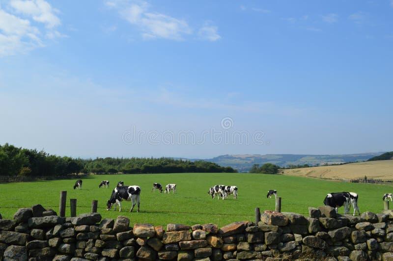 Mooi Landbouwbedrijf royalty-vrije stock foto's