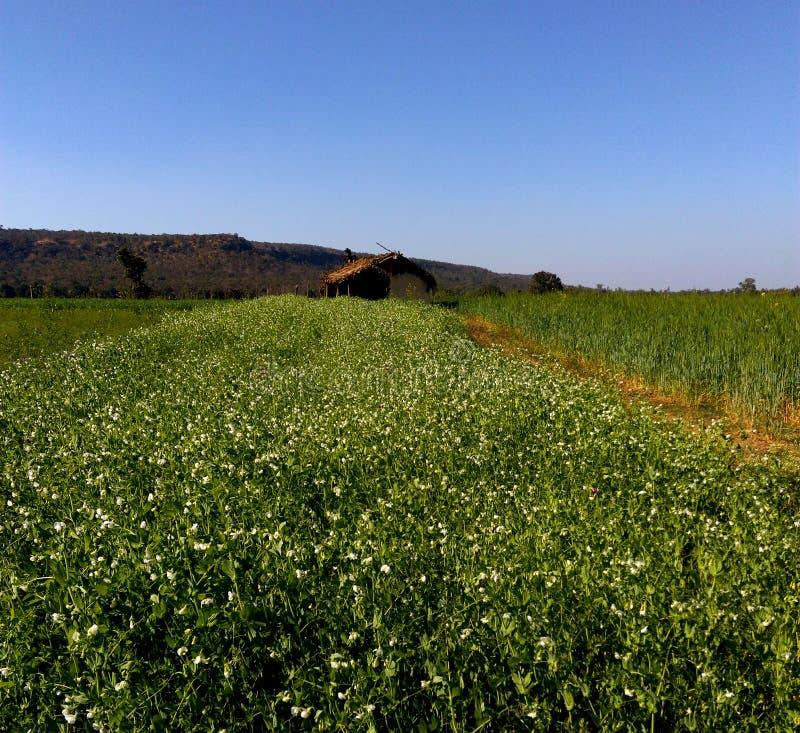 Mooi landbouwgrond en landschap, samarda, Bhopal, India royalty-vrije stock foto's