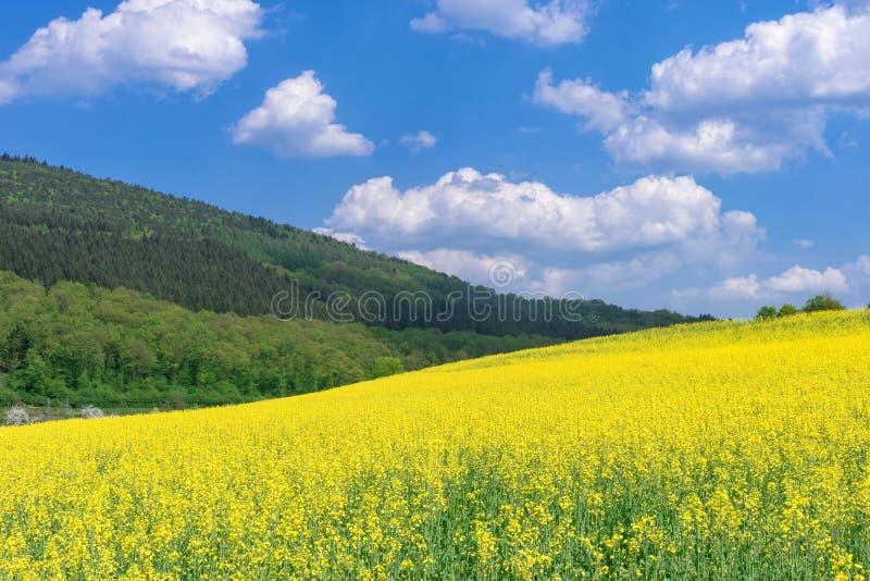 Mooi landelijk de lentelandschap met geel raapzaadgebied in de voorgrond royalty-vrije stock foto's
