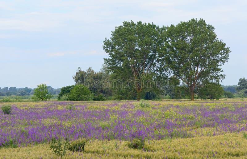 Mooi landelijk landschap royalty-vrije stock afbeeldingen