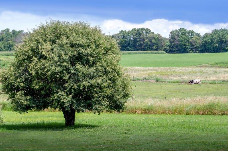 Mooi landelijk landschap in Michigan stock afbeelding