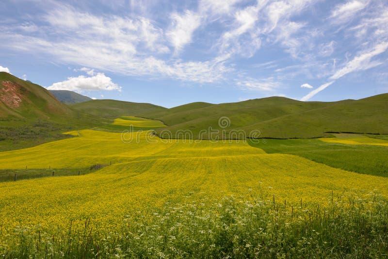 Mooi landschap stock afbeelding