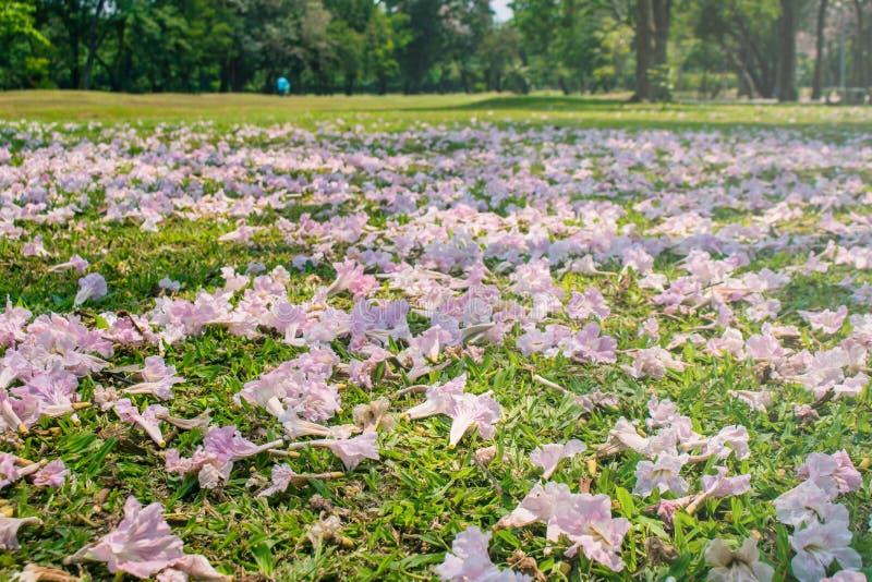Mooi landschap in de herfst seizoengebonden van roze bloemen gevallen op het groene gebied van de grasweide in openbaar park royalty-vrije stock fotografie