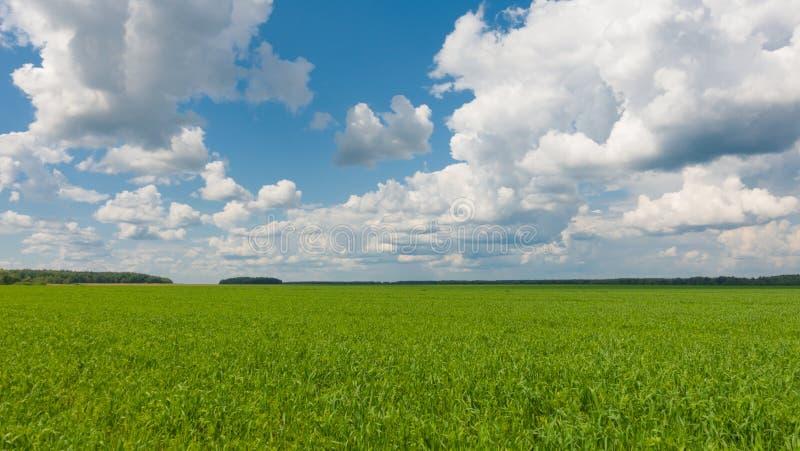 Mooi landschap, hemel en groen vers gras Gras en hemel bij mooie dag royalty-vrije stock afbeelding