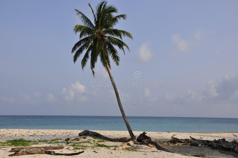 Mooi Landschap Kokospalm langs de kust royalty-vrije stock afbeelding
