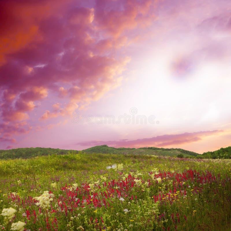 Mooi landschap met bloemen stock afbeeldingen
