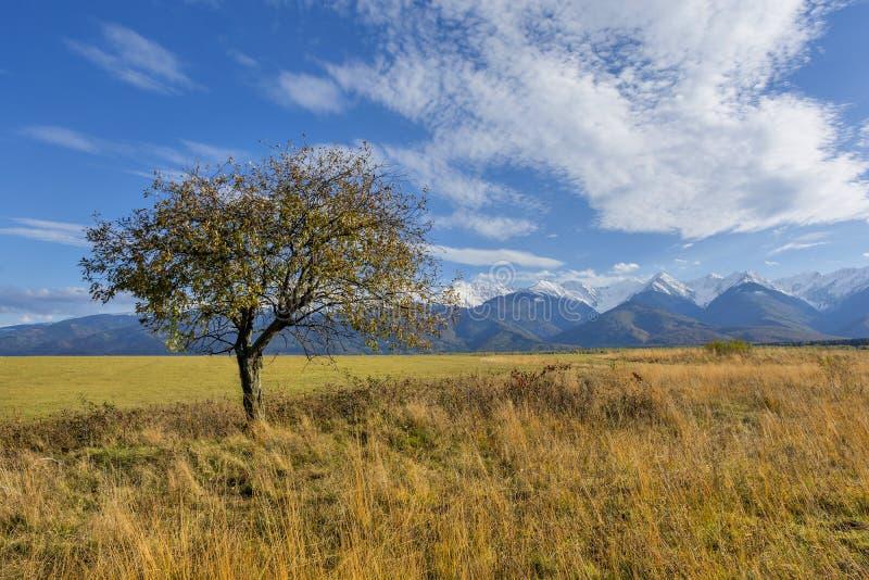 Mooi landschap met de herfstboom en gevallen bladeren met Karpatische bergen op de achtergrond stock foto's