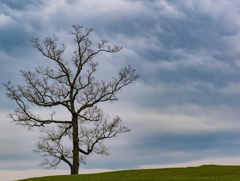 Mooi landschap met eenzame boomtribunes op een groen gebied royalty-vrije stock foto's