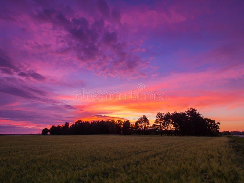 Mooi landschap met gebied en silhouttes van bomen tijdens prachtige zonsondergang royalty-vrije stock afbeelding
