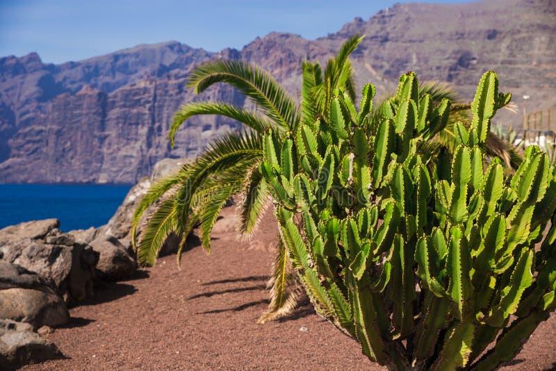 Mooi landschap met oceaan en rotsen Grote rotsen door het overzees met palm en cactussen royalty-vrije stock afbeeldingen