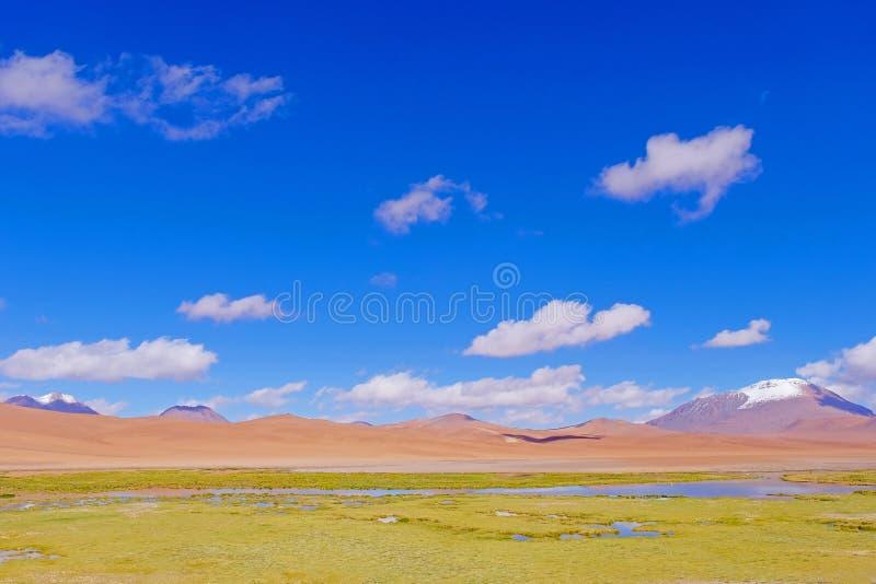 Mooi landschap met punaweide, snow-covered bergen en lagune, dichtbij Paso DE Jama, Chili stock fotografie