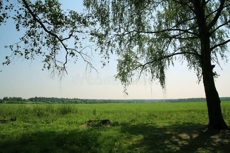 Mooi landschap met weide, boom en verre horizon stock afbeelding