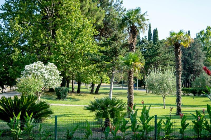 Mooi landschap in park met boom en groen grasgebied royalty-vrije stock foto's