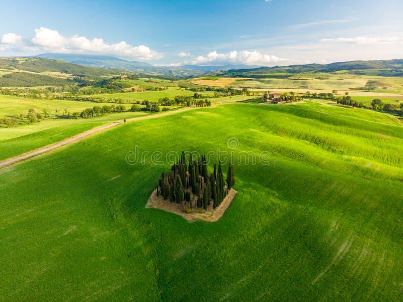 Mooi landschap van Toscanië in Italië - Groep Italiaanse cipressen dichtbij dÂ'Orcia van San Quirico - satellietbeeld - Val-d'O stock fotografie