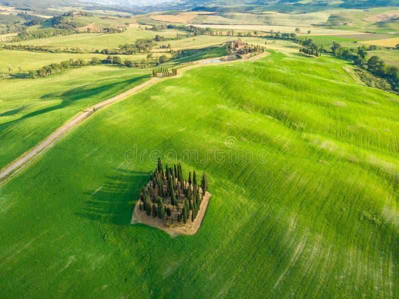 Mooi landschap van Toscanië in Italië - Groep Italiaanse cipressen dichtbij dÂ'Orcia van San Quirico - satellietbeeld - Val-d'O royalty-vrije stock fotografie